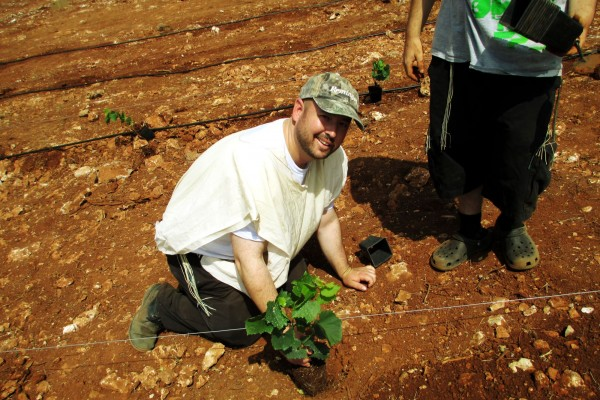 Rabbi Ben Packer, Director of the Heritage House, planting a vine in the land of the Jewish home land.