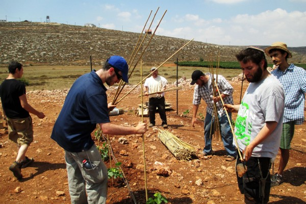 Jerusalem Heritage House guests putting in support sticks next to the plants