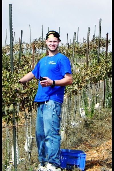 Meir Morozov Guest and Lone soldier of the Jerusalem Heritage House, picks grapes.