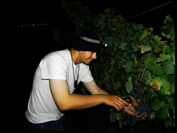 Zach Epstien a Jerusalem Heritage House Lone Soldier goes Grape Harvesting in the Shomron at night.