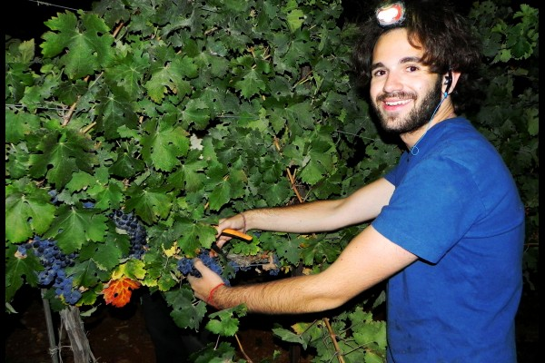 Red Junger a Guest of the Jerusalem Heritage House Participates in the last Grape Harvest of the Year, at night. Red Enjoys free accommodations, classes on Jewish Topics and a wide range of activities to foster Jewish Identity.