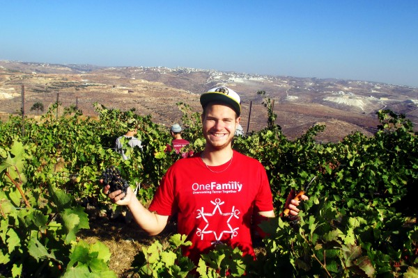 Meir Morozov a Guest and lone soldier at the Jerusalem Heritage House Enjoying the grape Harvest.