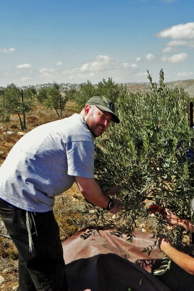 Rabbi Ben Packer Director of the Heritage House Harvests Olives Near Efrat in Judea and Samaria.