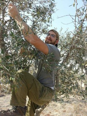 fun times climbing the tree to get to the olives!
