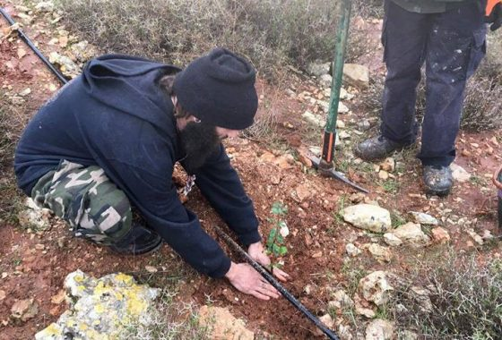 Birthright extenders plant a tree in Israel